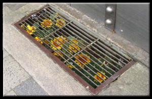 sunflowers-under-city-floor-grates